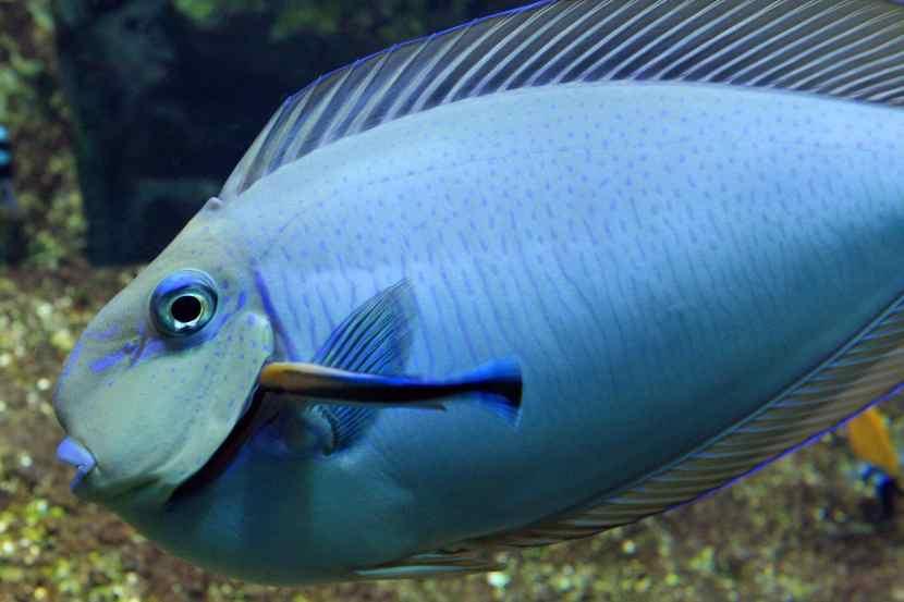 16 février 2019 : Bourse aquariophileACL