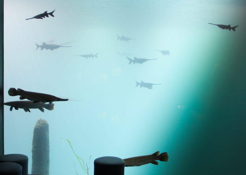 22 septembre : Visite des coulissesd'Aquatis