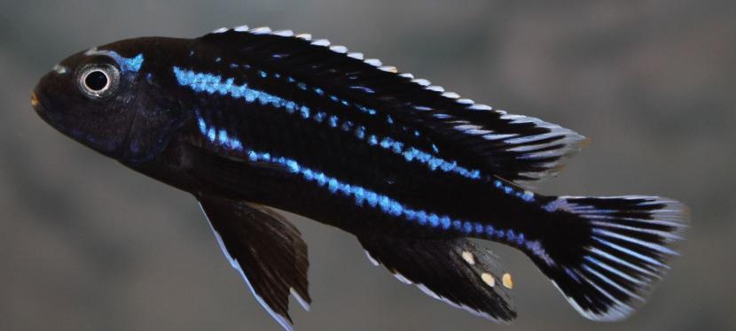 15 février 2020 : Bourse aquariophile del'ACL
